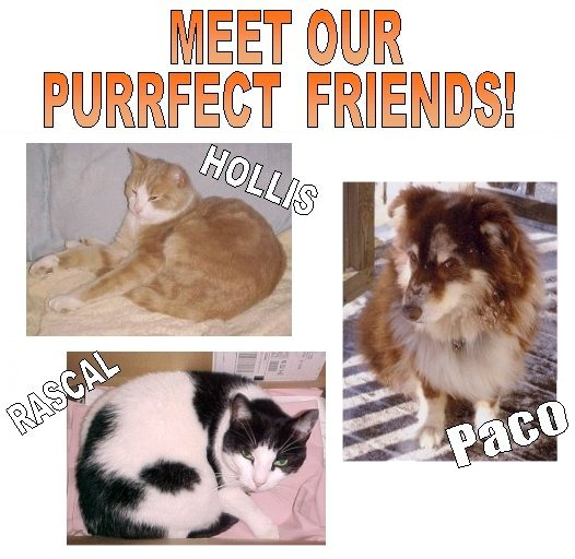Picture of our cats ~ our Purrfect Friends!